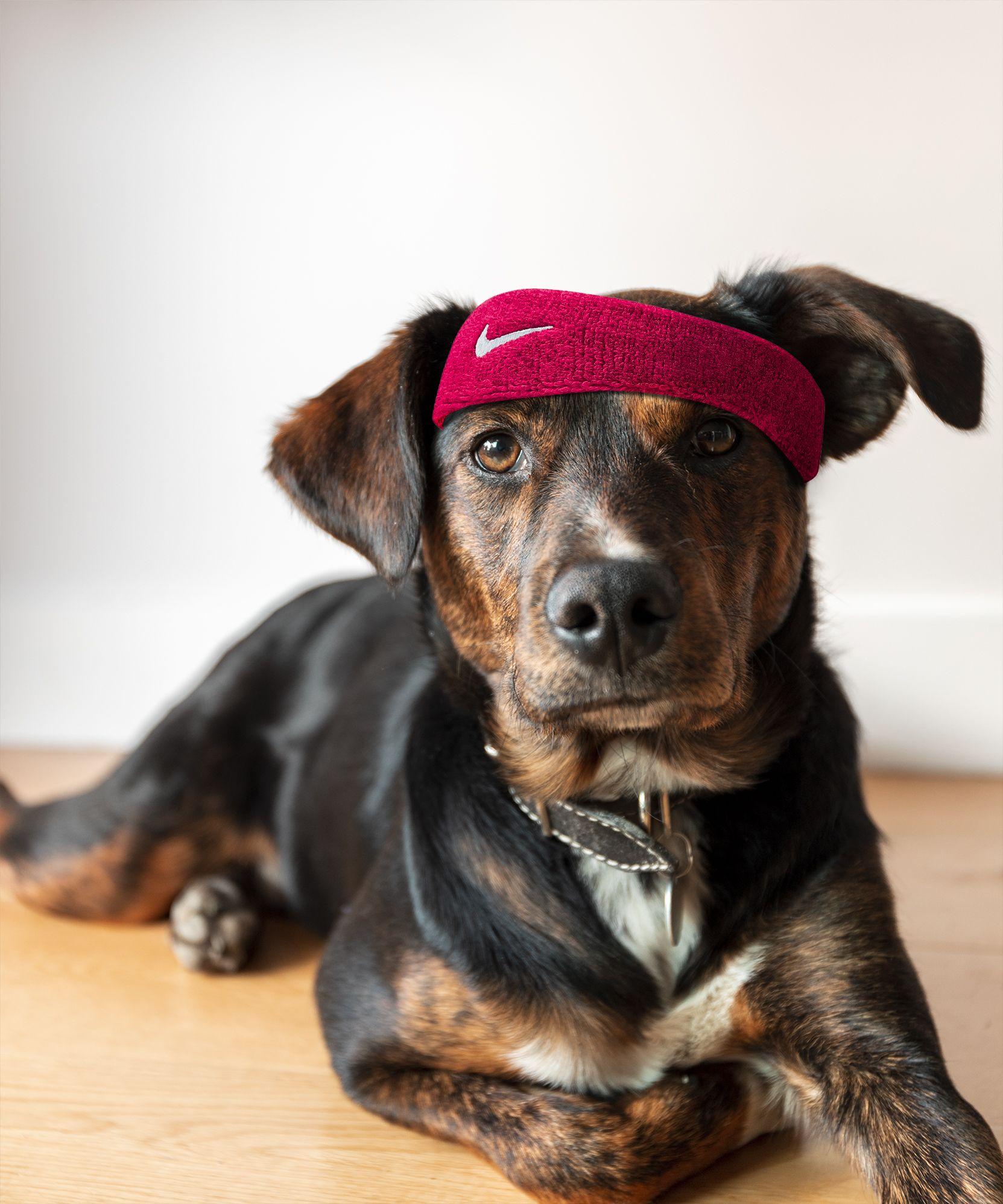 Un perro para fotografiar