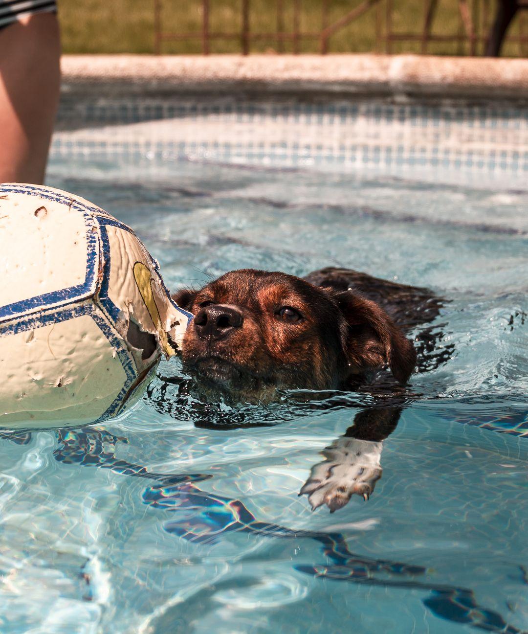 Sir lobo y la piscina