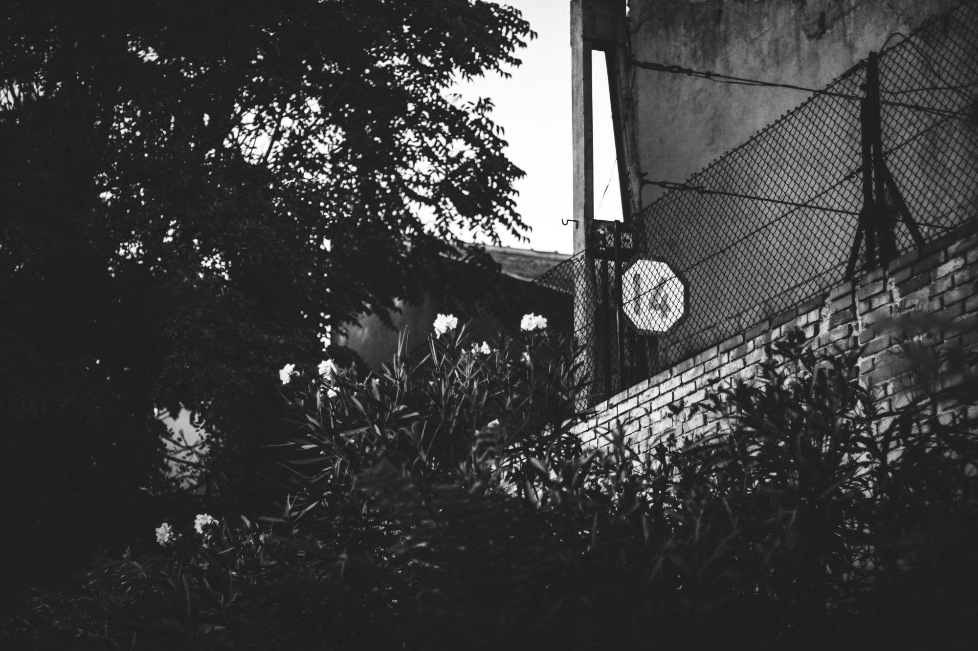 diez mil horas de fotografía